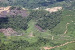 Deforestation in Borneo -- sabah_2455