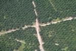 Oil palm plantation -- sabah_2456