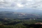 Oil palm plantation -- sabah_2462