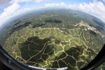 Oil palm plantation -- sabah_2470