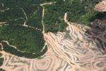 Deforestation in Borneo -- sabah_2471