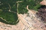 Deforestation in Borneo -- sabah_2472