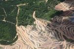 Deforestation in Borneo -- sabah_2474