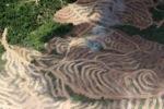 Deforestation in Borneo -- sabah_2476