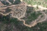 Deforestation in Borneo -- sabah_2479