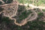 Deforestation in Borneo -- sabah_2480