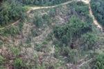 Deforestation in Borneo -- sabah_2483