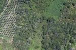 Deforestation in Borneo -- sabah_2486