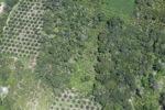 Deforestation in Borneo -- sabah_2487