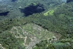 Deforestation in Borneo -- sabah_2493