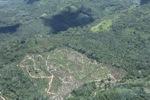 Deforestation in Borneo -- sabah_2494