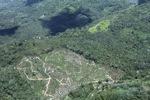 Deforestation in Borneo -- sabah_2495