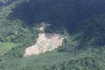 Deforestation in Borneo -- sabah_2497