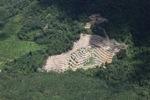 Deforestation in Borneo -- sabah_2498