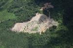 Deforestation in Borneo -- sabah_2499
