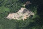 Deforestation in Borneo -- sabah_2500