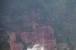 Deforestation in Borneo -- sabah_2509
