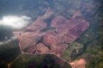 Deforestation in Borneo -- sabah_2510