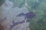 Deforestation in Borneo -- sabah_2529