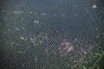 Oil palm plantation -- sabah_2545