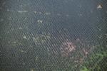 Oil palm plantation -- sabah_2546