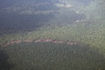 Oil palm and forest -- sabah_2548