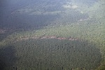 Oil palm and forest -- sabah_2549