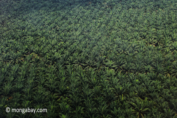 Oil palm estate in Malaysia. Photo by: Rhett A. Butler.