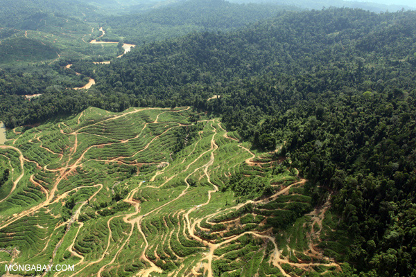 Deforestation for an oil palm plantation abuts forest in Sabah, Malaysia. Photo by Rhett Butler.