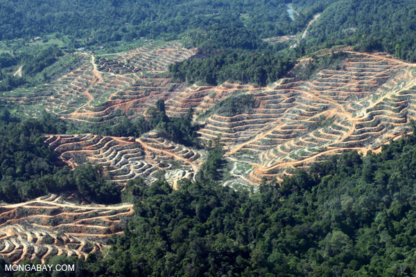 Clearing of rainforest in Malaysian Borneo for oil palm plantations.