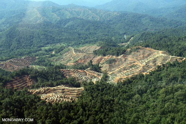 Forest conversion for palm oil production in Borneo.