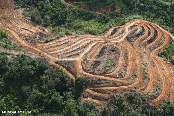 Scientists say that logged forests are far preferable to oil palm plantations (such as the one pictured here) at least for orangutans. Photo by: Rhett A. Butler.