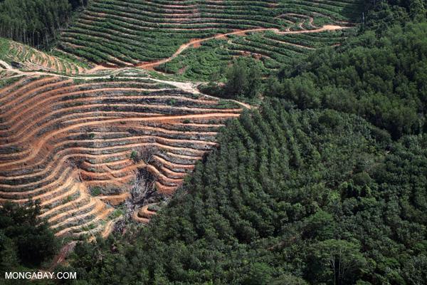Deforestación para la producción de pulpa y papel en Malasia.