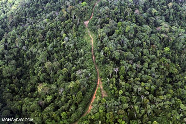 Logging road in Sabah.