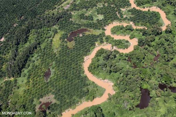 Oil palm plantation in Sabah, Malaysian Borneo. Photo credit: Rhett Butler.