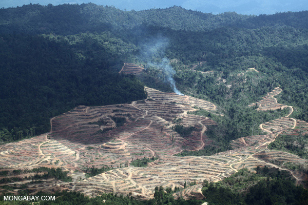 Fire burning on an oil palm plantation in Borneo.