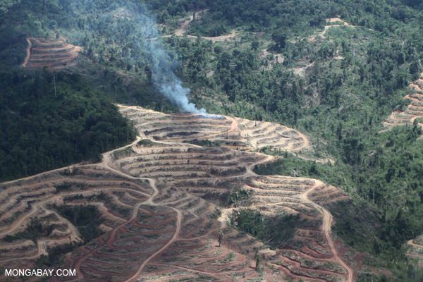 Fire burning on an oil palm plantation