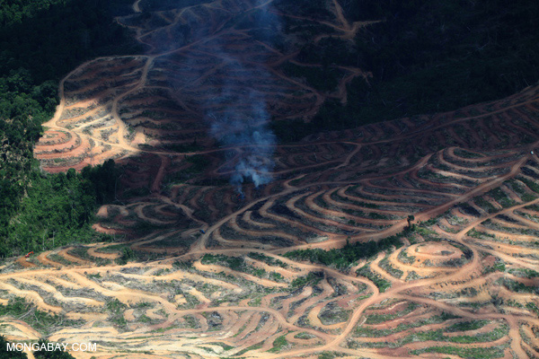 A fire burns on an oil palm plantation in Borneo. Photo: Rhett A. Butler