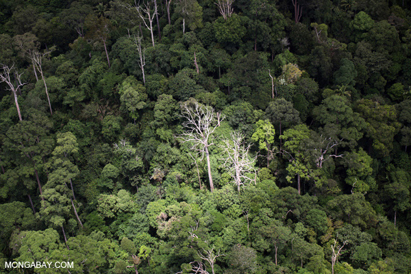 Forest in Malaysian Borneo. Photo by: Rhett A. Butler.