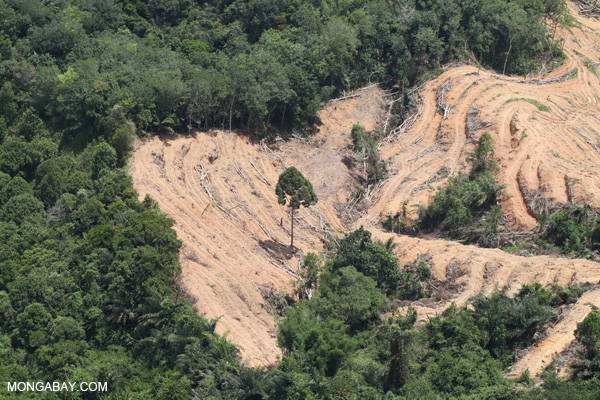 Deforestation for an oil palm plantation in Borneo