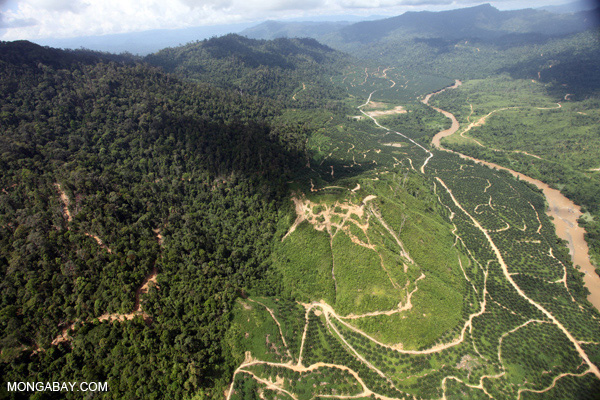 Logged over forest and oil palm in Sabah