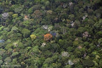 Canopée de la forêt tropicale amazonienne