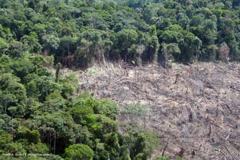 Deforestation in Peru
