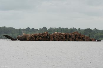 Logs in transport in Gabon