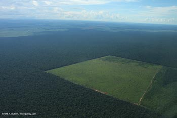 Deforestación en Brasil