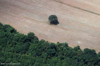 Déforestation en Amazonie  brésilienne