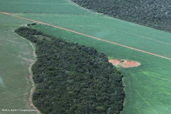 Soybeans and forest in Brazil