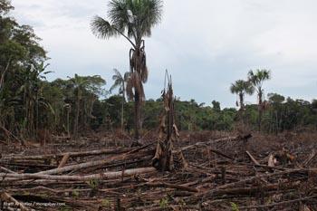 Abholzung in Kolumbien