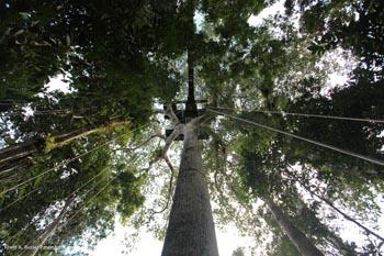 Plattform in einer Baumkrone in Kolumbien