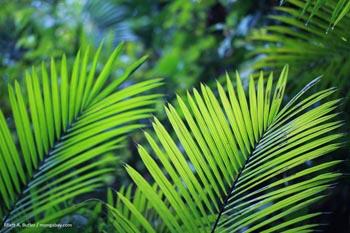 Palmier en Colombie